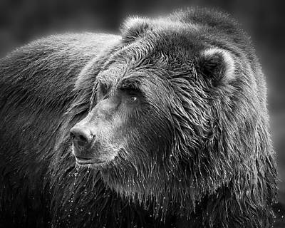 Photograph - Drinking Grizzly Bear Black And White by Steve McKinzie