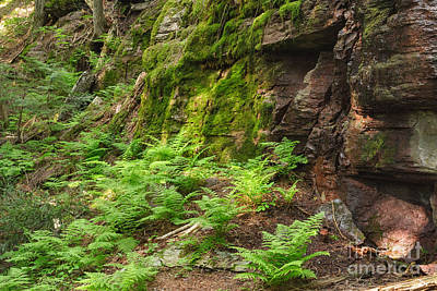Photograph - Dripping Water And Ferns And Moss by Charles Kozierok