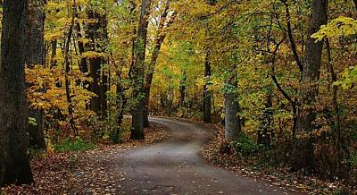 Lowden State Park Photograph - Drive Through The Woods by Bruce Bley