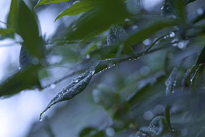 Photograph - Drizzle - Shades Of Blue And Green by Jane Eleanor Nicholas