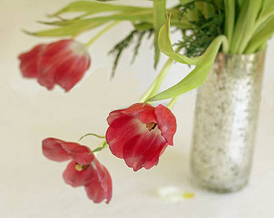 Art Print featuring the photograph Drooping Tulips by Rosemary Aubut