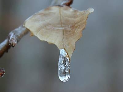 Drop Of Ice Art Print