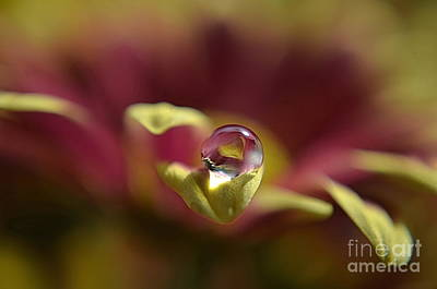 Drop On Petal Art Print