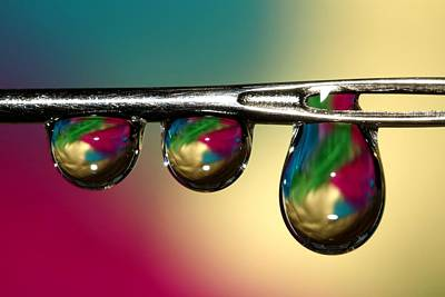 Photograph - Drop by Sharon Johnstone