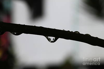 Wall Art - Photograph - Drop Silhouette by Sara Ricer