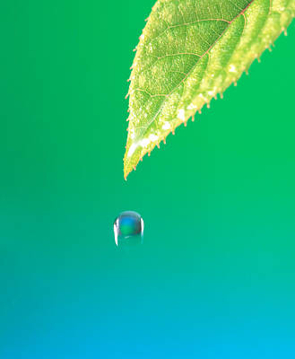 Droplet Falling From Green Leaf Art Print by Panoramic Images