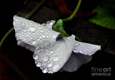 Photograph - Droplets 2 by Staci Bigelow
