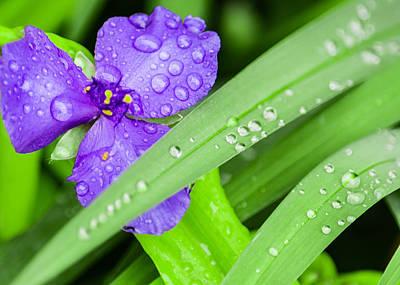 Flower Gardens Photograph - Droplets by Jon Woodhams