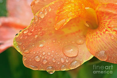 Photograph - Droplets On A Canna II by Gene Berkenbile