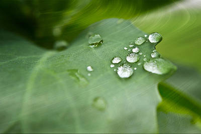 Droplets On Green Print by Melissa Smith