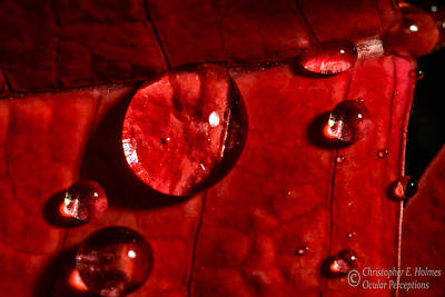 Photograph - Droplets On Red by Christopher Holmes