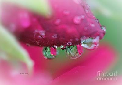 Droplets On The Rose Art Print