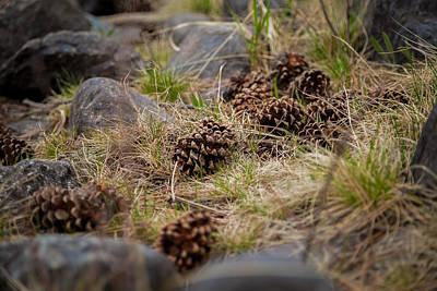 Photograph - Dropped Pine by Ryan Heffron
