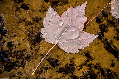 Photograph - Drops Of Autumn by Mick Anderson