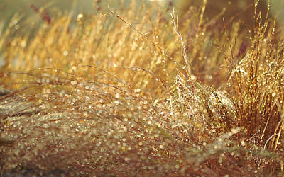 Photograph - Drops Of Gold by Jane Eleanor Nicholas