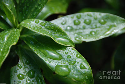 Nature Photograph - Drops Of Life by Charles Dobbs