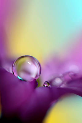 Photograph - Drops Of Spring Colour by Sharon Johnstone