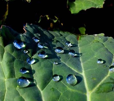 Drops On A Leaf Art Print by Claudia Cefali