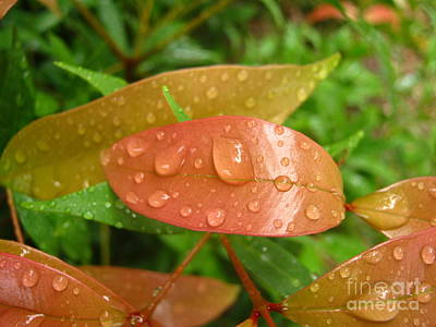 Drops On Leave Art Print by Michelle Meenawong