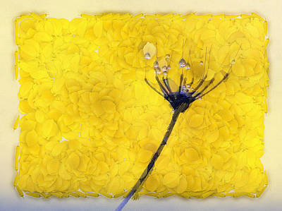 Dandelion Digital Art - Drops On The Flower by Odon Czintos
