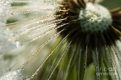 Photograph - Drops by Simona Ghidini