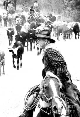 Cattle Drive Photograph - Drover At Work by Fred Lassmann