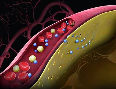 Drug Crossing The Blood-brain Barrier Art Print by Claus Lunau/science Photo Library