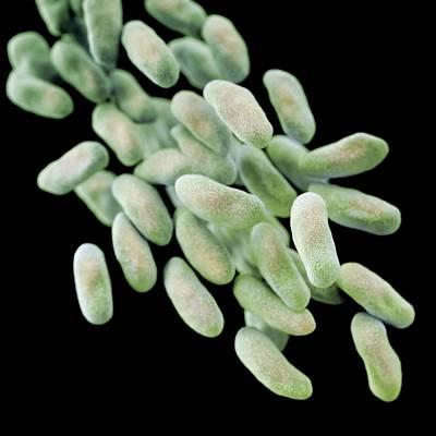 Drug-resistant Enterobacteria Bacteria Art Print