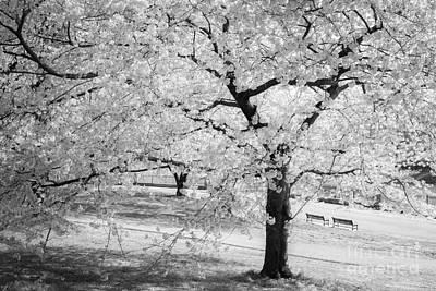 Photograph - Druid Hill Park Spring by Chris Scroggins