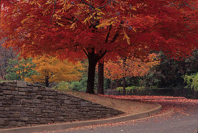Photograph - Druid Park-baltimore -- Maryland II by Harold E McCray