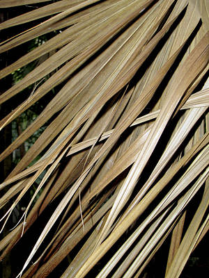 Photograph - Dry Palm Leaves by Bob Slitzan