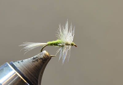 Photograph - Dry Fly 002 by Phil Rispin