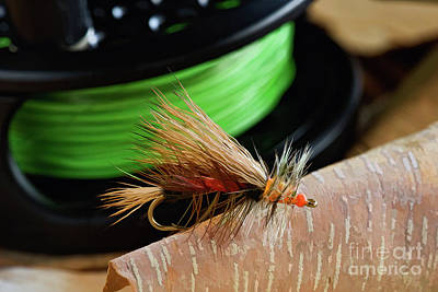 Photograph - Dry Fly - D003399b by Daniel Dempster