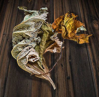 Photograph - Dry Leaves 11 by Vladimir Kholostykh