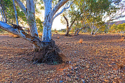 Creek Beds Photograph - Dry Outback Creek Bed by Bill  Robinson