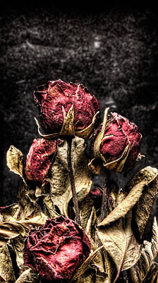 Photograph - Dry Roses In Black by Weston Westmoreland