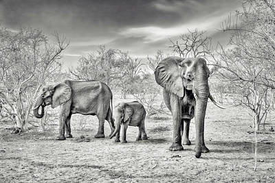 Travel Photograph - Dry Season (bw) by Piet Flour