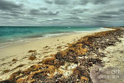 Dry Tortugas Beach Art Print by Adam Jewell