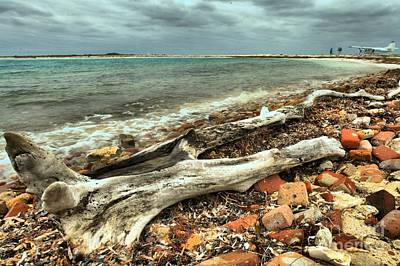 Photograph - Dry Tortugas Driftwood by Adam Jewell