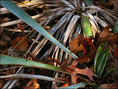 Photograph - Drycactuscomp 2009 by Glenn Bautista