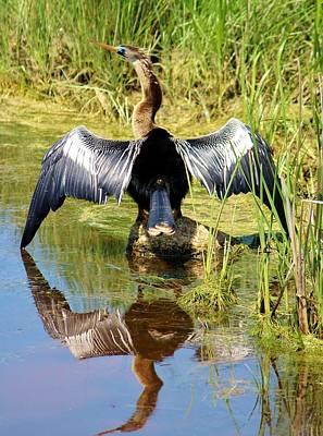 Anhinga Digital Art - Drying Her Wings by Cynthia Guinn