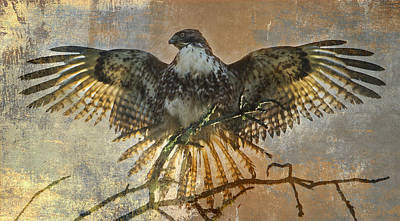 Red Tail Hawk Wall Art - Photograph - Drying Out by Angie Vogel