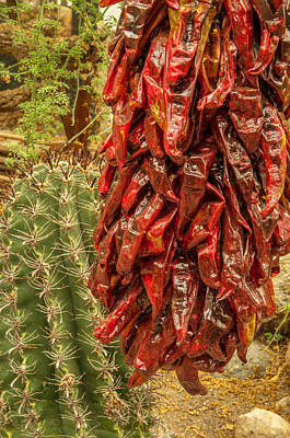 Photograph - Drying Peppers And Barrel Cactus by Gene Sherrill