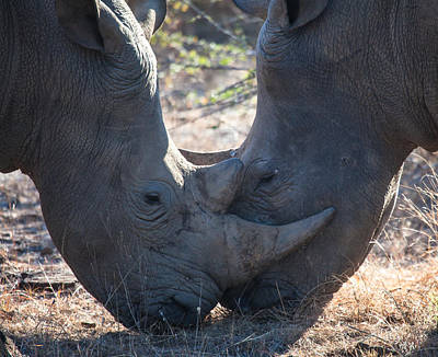 Photograph - Dual Rhino's by Craig Brown