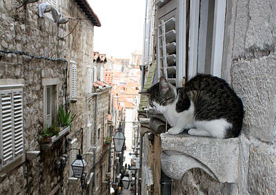Photograph - Dubrovnik Alley Cat by David Nicholls