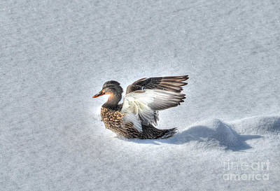 Photograph - Duck Angel by Skye Ryan-Evans