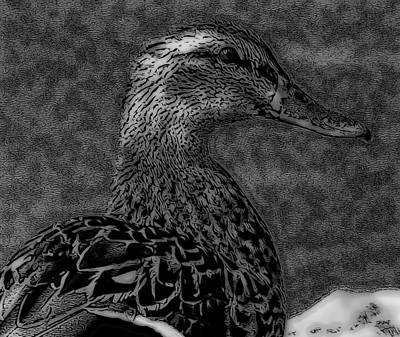 Duck Digital Art - Duck Art Tribal Mallard Bw II by Lesa Fine