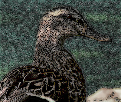 Duck Digital Art - Duck Art Tribal Mallard Teal II by Lesa Fine