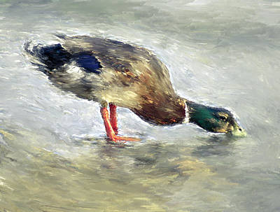Duck Drinking Water Art Print