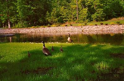 Duck Family Getting Back From Pond Art Print by Amazing Photographs AKA Christian Wilson